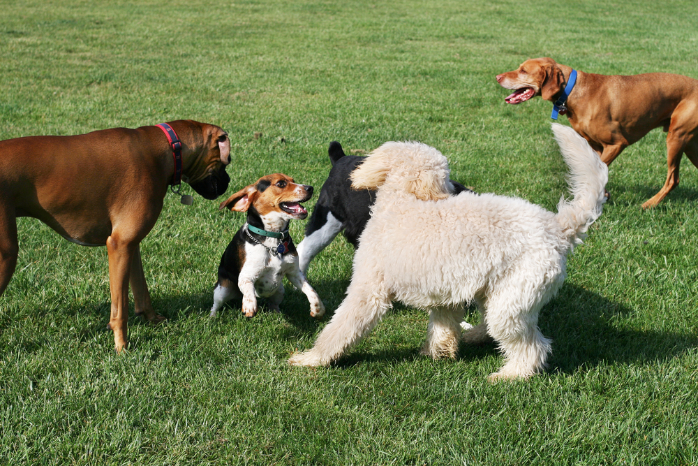 Different types of dogs and how to manage their health